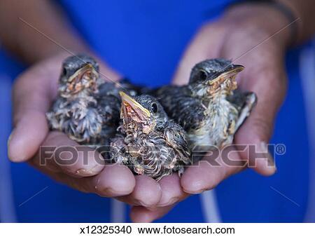 Baby Tauben