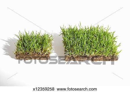 immagini due pannelli di erba zolla erbosa in
