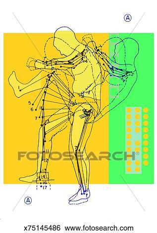 stock illustration of diagram of human body movement
