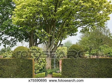Banque d 39 image jardin anglais if haies x75590695 for Conception jardin anglais