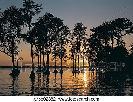 Stock photo of cypress trees in cypress gardens at sunset for Cypress gardens mural