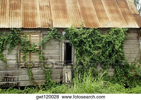 Pictures of A primitive farm house with a tin roof, Barbados ...