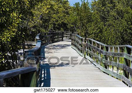Immagine - passeggiata, in, il, foresta, tropicale, legno duro, amaca, chiavi...