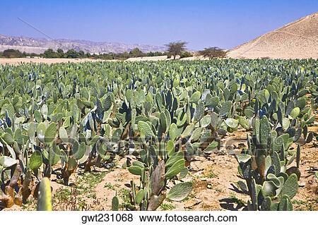 Field Crops Clipart Crop in a Field Nazca