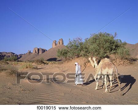 Banque d 39 image alg rie hoggar touareg camel driver for Banque exterieur d algerie