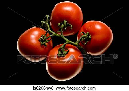 Pictures of Tomatoes on the vine is0266nw8 - Search Stock ...