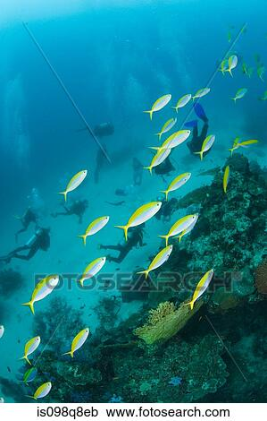Stock photography of fish and scuba divers is098q8eb for Diving and fishing mural