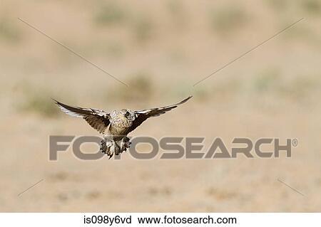 长颈鹿海绵纸粘贴画