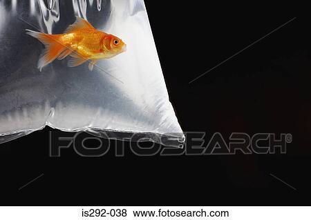 Images poisson rouge dans sac plastique is292 038 for Poisson rouge plastique