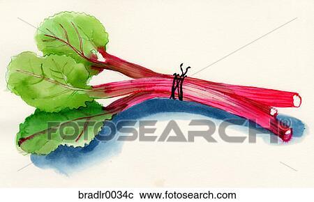 banques de photographies rhubarbe nourriture boisson fruit l gume tige attach ensemble. Black Bedroom Furniture Sets. Home Design Ideas