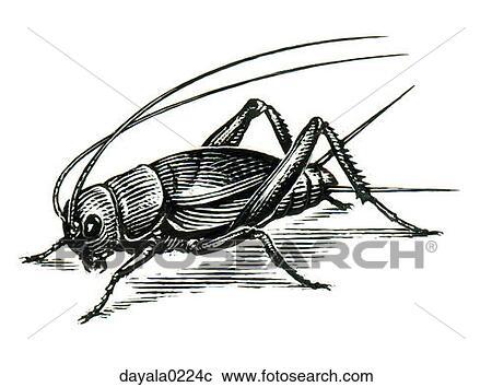 stock fotografie grille wanze insekt tier kreatur. Black Bedroom Furniture Sets. Home Design Ideas