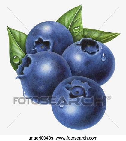 Stock Illustration of Blueberries ungerj0048s - Search ...