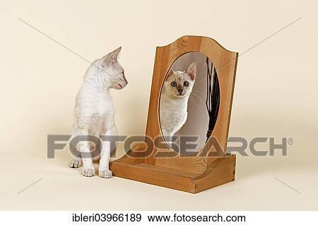 bengal cat coat glitter