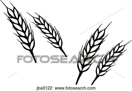 clip art of bunch of wheat b w jba0122 search clipart rh fotosearch com what clipart what clipart