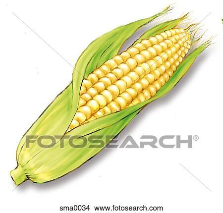 手绘图 - 玉米, 带, 外皮