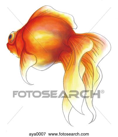Banque d 39 illustrations a poisson rouge aya0007 for Prix poisson rouge maxi zoo