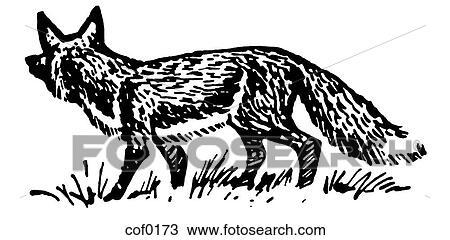 zeichnung a schwarz wei version von ein abbildung von a herumtreiben fuchs cof0173. Black Bedroom Furniture Sets. Home Design Ideas