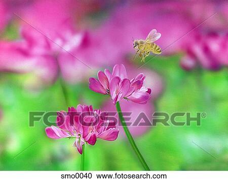 Stock illustrationen biene fliegen oben purpurne for Fliegen in blumen
