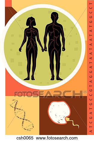Stock Illustration of Reproduction csh0065 - Search ...