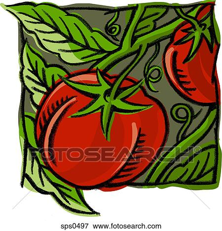 Stock Illustration of A picture of tomatoes on the vine ...