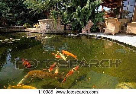 Archivio immagini fish carpa koi 110985 cerca for Carpa giapponese prezzo