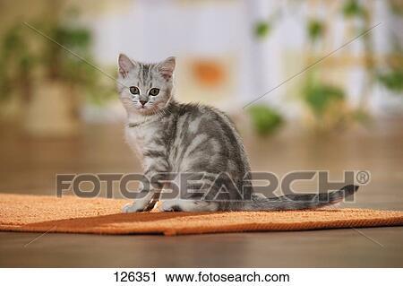 小猫钓鱼卡纸剪贴画