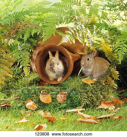 Immagini due giovane pigmeo conigli in giardino for Anfora giardino