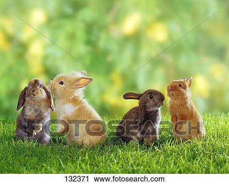 stock fotografie vier dwerg konijnen op weide 132371 zoek stockfoto 39 s beelden prints. Black Bedroom Furniture Sets. Home Design Ideas