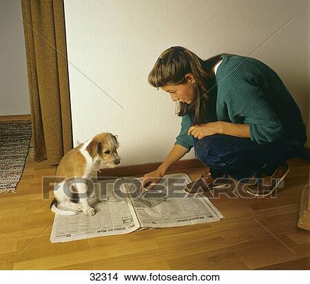 Archivio fotografico cane educazione house trained for Educazione cane