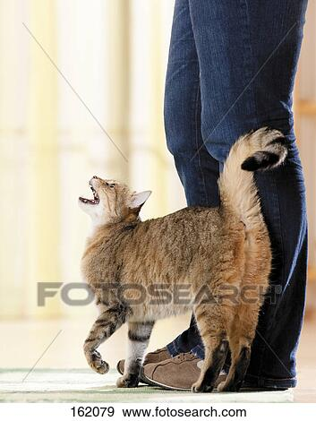 raid flea spray safe for cats