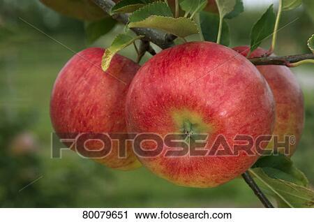 apple deu