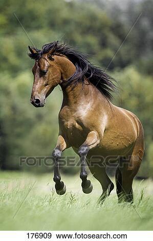 Beat the BarnSour Horse Blues  Expert advice on horse