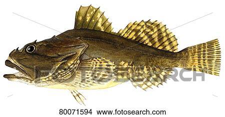 Scorpion Fish Drawing Scorpion Scorpion Fish