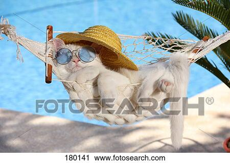 Stock Photography Of Domestic Cat White Kitten 87 Days Old With