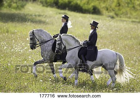 banque d 39 images pur espagnol cheval andalusian et lusitano noir gris cheval. Black Bedroom Furniture Sets. Home Design Ideas