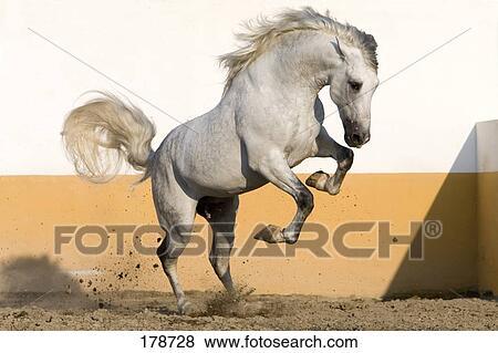 Monty Roberts Equus Online University  Montys Complete