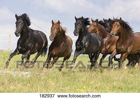 image pur espagnol cheval andalusian troupeau de jeune talons galoper sur a. Black Bedroom Furniture Sets. Home Design Ideas