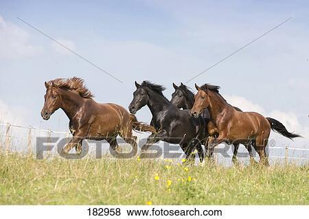 images pur espagnol cheval andalusian groupe de jeune talons galoper sur a. Black Bedroom Furniture Sets. Home Design Ideas