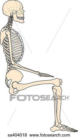 stock illustration of lateral view of full skeleton sitting, Skeleton