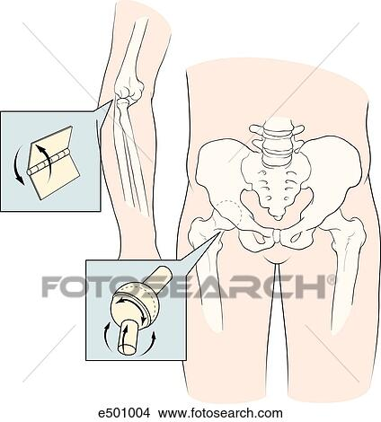 Drawings Of Illustration Showing Two Types Of Joints The Elbow Is