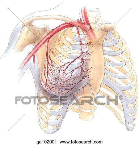 anatomy dissertations Get started anatomy order description a final exam write essay about 500 words  the question is (talk about a medical imaging technology in relation to a speciality and how it is used with specific disease .