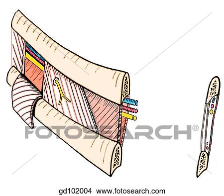 ... Clip Art Illustrations, Wall Posters, and EPS Vector Graphics Images