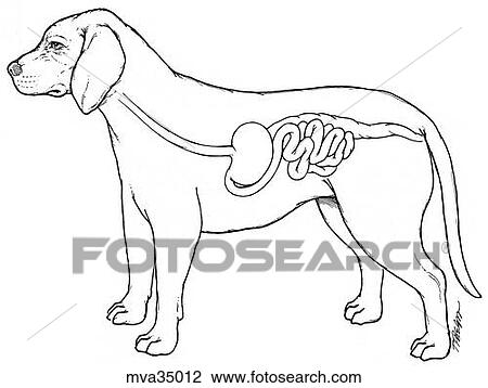 Rat Illustrations And Clip Art 1964 Rat Royalty Free furthermore White Snowflake Clipart further schule Und Familie de assets images malen raetselbilder  th7 irrgarten Erde gif in addition Schematic Cross Section Of Skin additionally Coloring Extensions. on digestive system clip art