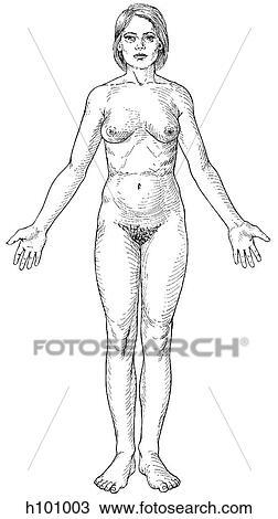 手绘图 - 女性