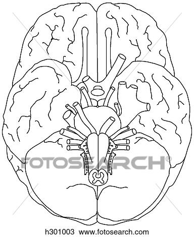 Dibujos De Cerebros