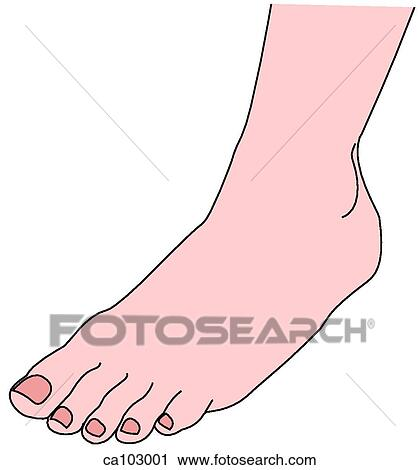 clipart of ankle and dorsum of foot ca103001 - search clip art, Cephalic Vein
