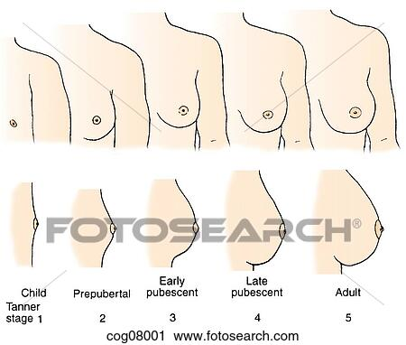 clinical pictures of penis sizes