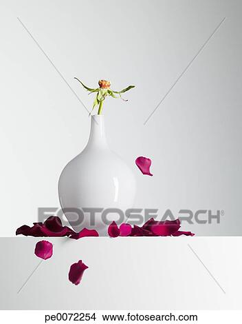 Stock Photo of Red flower petals falling from stem in vase ...