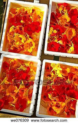 banque de photographies comestible jardin capucine tropaeolum majus fleurs pour sale. Black Bedroom Furniture Sets. Home Design Ideas