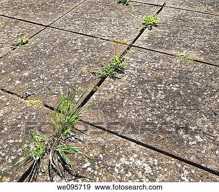 banque de photographies commun mauvaises herbes croissant entre pavage dalles sur a. Black Bedroom Furniture Sets. Home Design Ideas